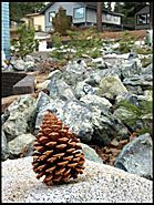 Pine Cone, Regan Beach, Lake Tahoe