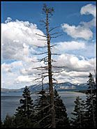 Trees, Emerald Bay, Lake Tahoe