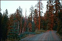 Sunset, Plumas County, near Lassen Volcanic National Park