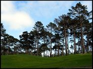 Golf Course and trees, Pebble Beach