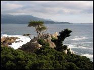The Lone Cypress, Pebble Beach, Monterey