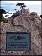 Sam Morse Plaque and Lone Cypress, Pebble Beach