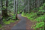 Path, Mt. Rainier National Park