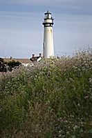 Grass and Pigeon Point Light Station