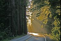 Sunlight streaming onto the road, Redwood National Park