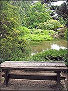 Pool and Bench, Strybing Arboretum, Golden Gate Park, San Francisco