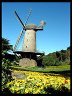 Windmill, Queen Wilhelmina Garden, Golden Gate Park, San Francisco