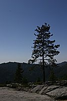 Tree and Beetle Rock, Sequoia National Park