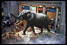 Stuffed Elephant, Rotunda of the Museum of Natural History, Washington, D.C.