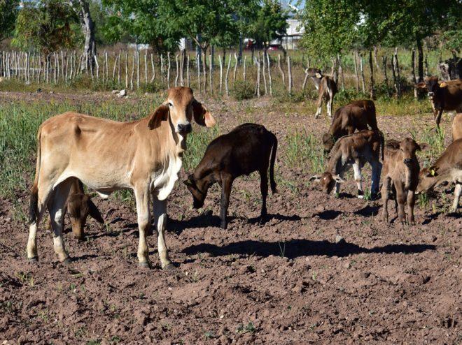 Construirán pozos para disminuir la sequía – Info Rural