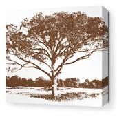 Tree in Chocolate Stretched Wall Art