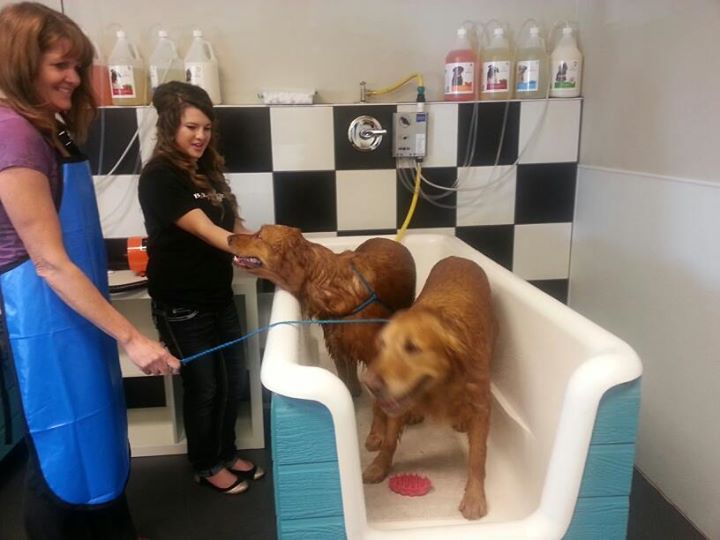 These Are The 10 Most Pet-Friendly Places Near Sacramento
