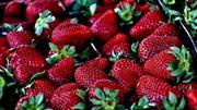 Why Spanish strawberries taste better in Spain