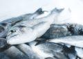 ¿Es rico en ácidos grasos omega-3 el pescado que consumimos en Chile?