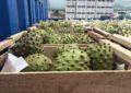 Frutecer: Las frutas como patrimonio y sus ecos en la Región de Coquimbo