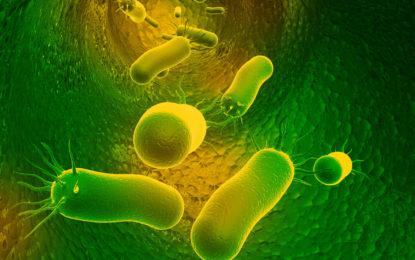 Núcleo Milenio Biología de la Microbiota: Estudia cómo un grupo relevante de bacterias intestinales asociadas a salud, se adquieren, persisten y se transmiten entre humanos
