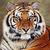 Pgcps thurgood marshall tigers