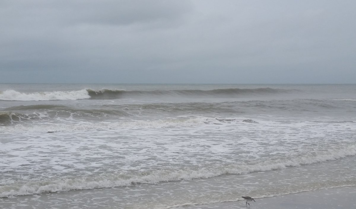 Surf Report: <p>Fun waves for the Gulf</p>
