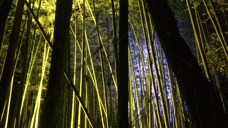 Trees3web