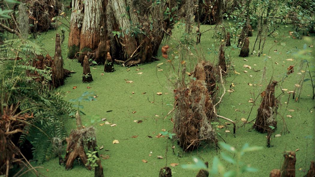 Swamp2web