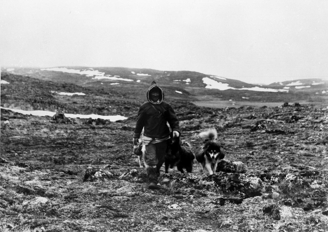 Black and white photo of a man walking on the land towards the camera. A few dogs saddled are walking besides him, and he is wearing a hood over his head.