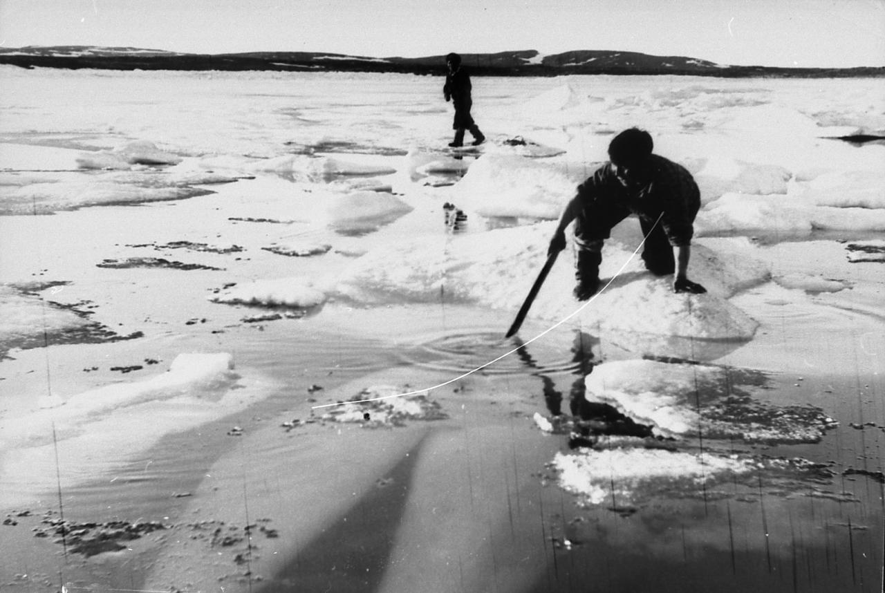 Black and white photo of two men standing on an icefloe surrounded by water. One of them is holding a stick in his hand. The other end of the stick is immersed in water, where we see the silhouette of a beluga.