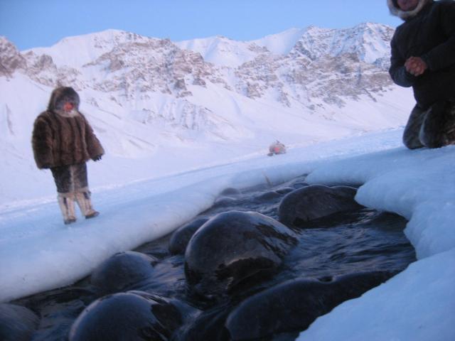 Stranded Narwhales