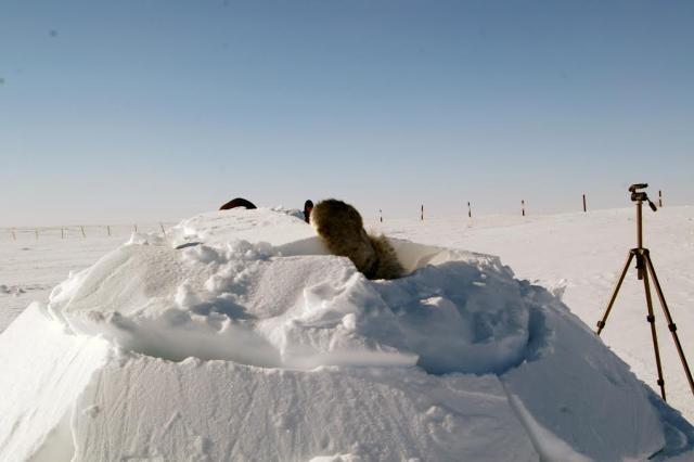iglu Inuit Qaujimajatuqangit