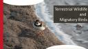 Link to: Baffinland Terrestrial Wildelife Presentation- English