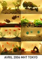 Aquarium%20tko