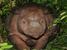 Dicerorhinos sumatrensis (Sumatran Rhinoceros)