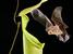 Kerivoula hardwickii (Hardwicke's Woolly Bat)