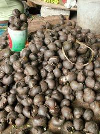Freshwater snails (Pila spp.) at a market in Accra, Ghana © Kevin Smith