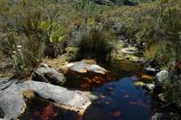 Restored stream in Table Mountain, South Africa © Michael Samways