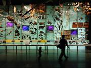 2010 is the International Year of Biodiversity. Photo © Dom Dada; flickr.