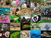 2015 IUCN species highlights Photo: IUCN