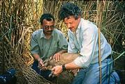 William with a captured Pygmy Hog (Porcula salvania) Photo: Roland Seitre