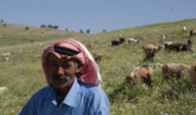 Bedouin Herder in the Hima Eyra Range Reserve, Balqa Governorate, Jordan. Photo: Dr Mahfouz Abu Zanat