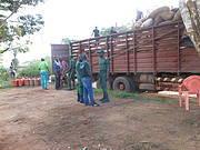 Cocoa truck hiding ivory tusk, Djoum, Cameroon Photo: Oliver Fankem