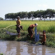 Harvesting fish from an agricultural irrigation channel between Taungoo and Mandalay Ayeyarwaddy Division in Myanmar Photo: Ritva Roesler