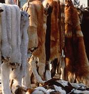 Animal skins for sale in a market. Photo: Sue Mainka