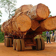 A timber lorry in Kongo village, Cameroon Photo: © Christian Laufenberg