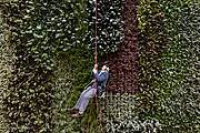 Sir David Attenborough abseiled down a living wall in the atrium of the new campus. Photo: Toby Smith