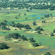 Boro and trees, Okavango delta Photo: Eliot Taylor