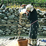 Woman preparing maize. Annapurna, Nepal (Photo: Georgina Peard)
