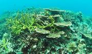 A healthy reef ecosystem in Koh Rong NMP. Photo: © MFF Cambodia