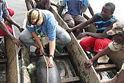 Lucy Diagne measures a West African Manatee Photo: Tomas Diagne