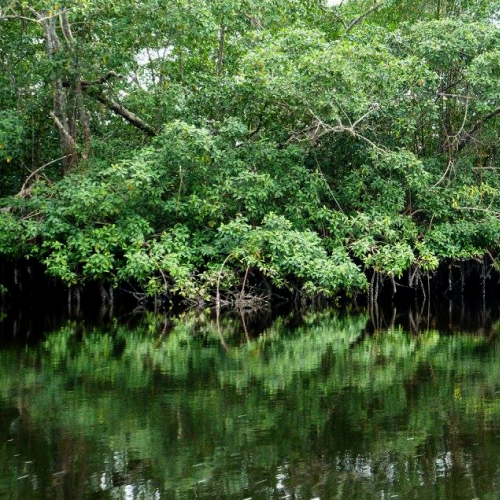 Mangroves. Photo: IUCN / James Oliver
