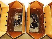 Boxed Oilies. Photo: Francois Louw