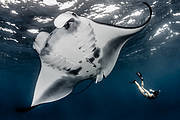 Manta Ray of Hope Photo: Shawn Heinrichs